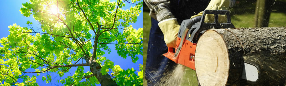 Tree Services Mableton